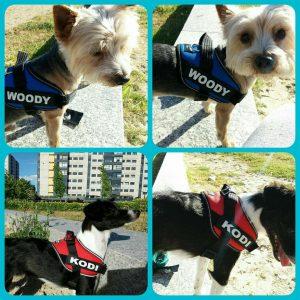 Woody y Kodi